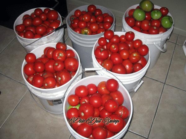 tomatoa-haul