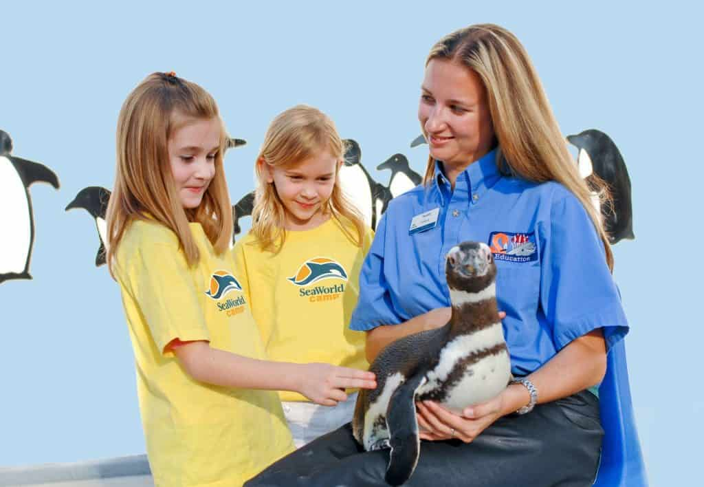 SeaWorld Campers Meet a Magellanic Penguin Hi Res