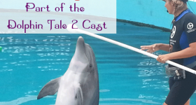 nicholas-dolphin-tale-2
