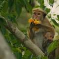 monkey kingdom1