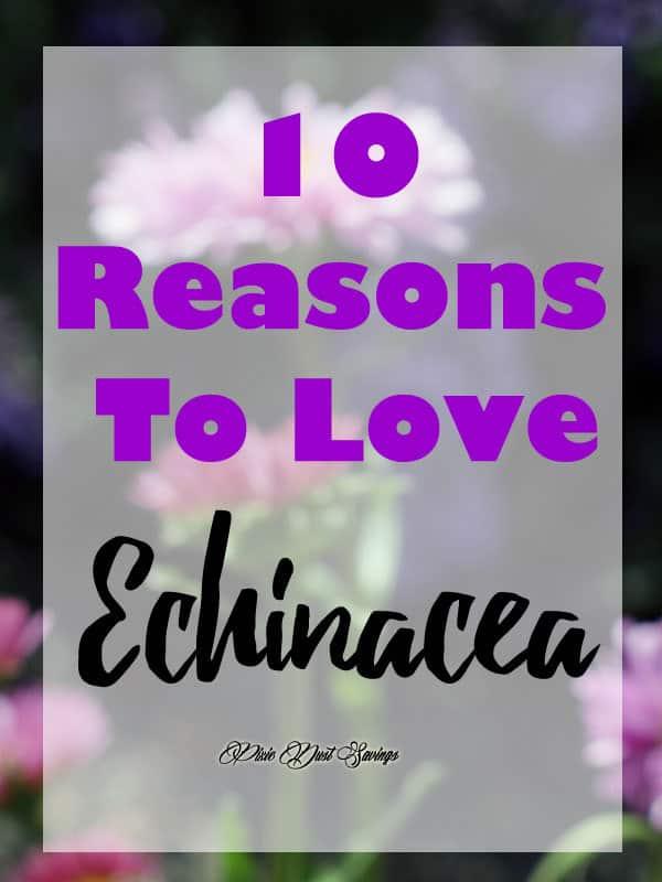 Love Echinacea