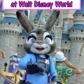 Judy-Hopps-and-Nick-Wilde-at-the-Magic-Kingdom
