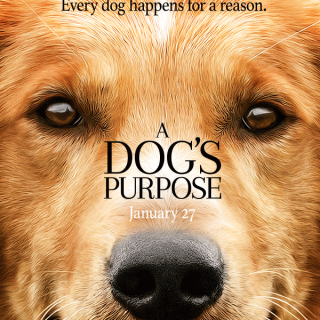 dogs-purpose-movie-2