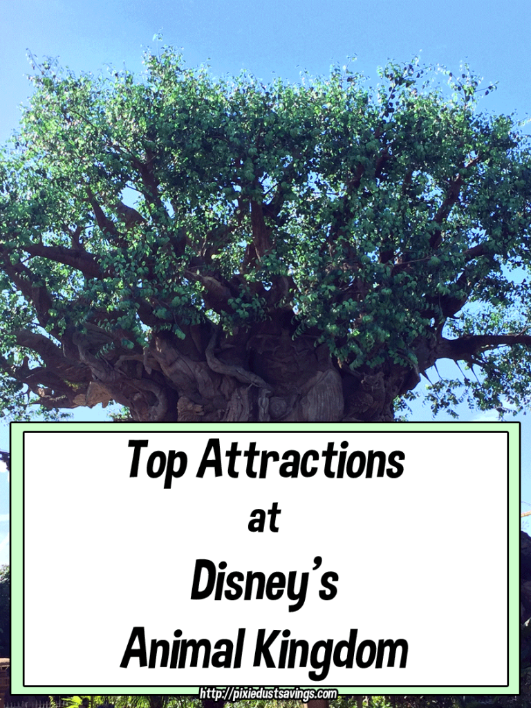 Animal Kingdom Top Attractions