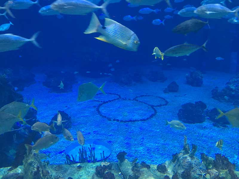 hidden mickey at the seas with nemo and friends